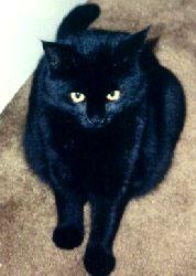 black-cat-coco-2.jpg
