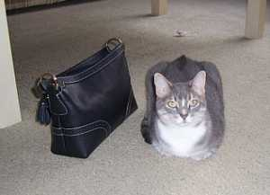 floor-purse-new.jpg
