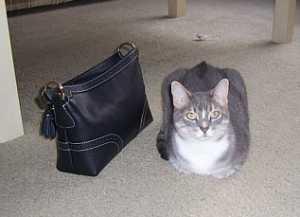 floor-purse-new.jpg