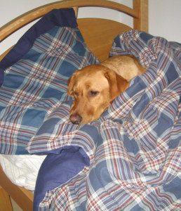 Sleeping in Jake's bed